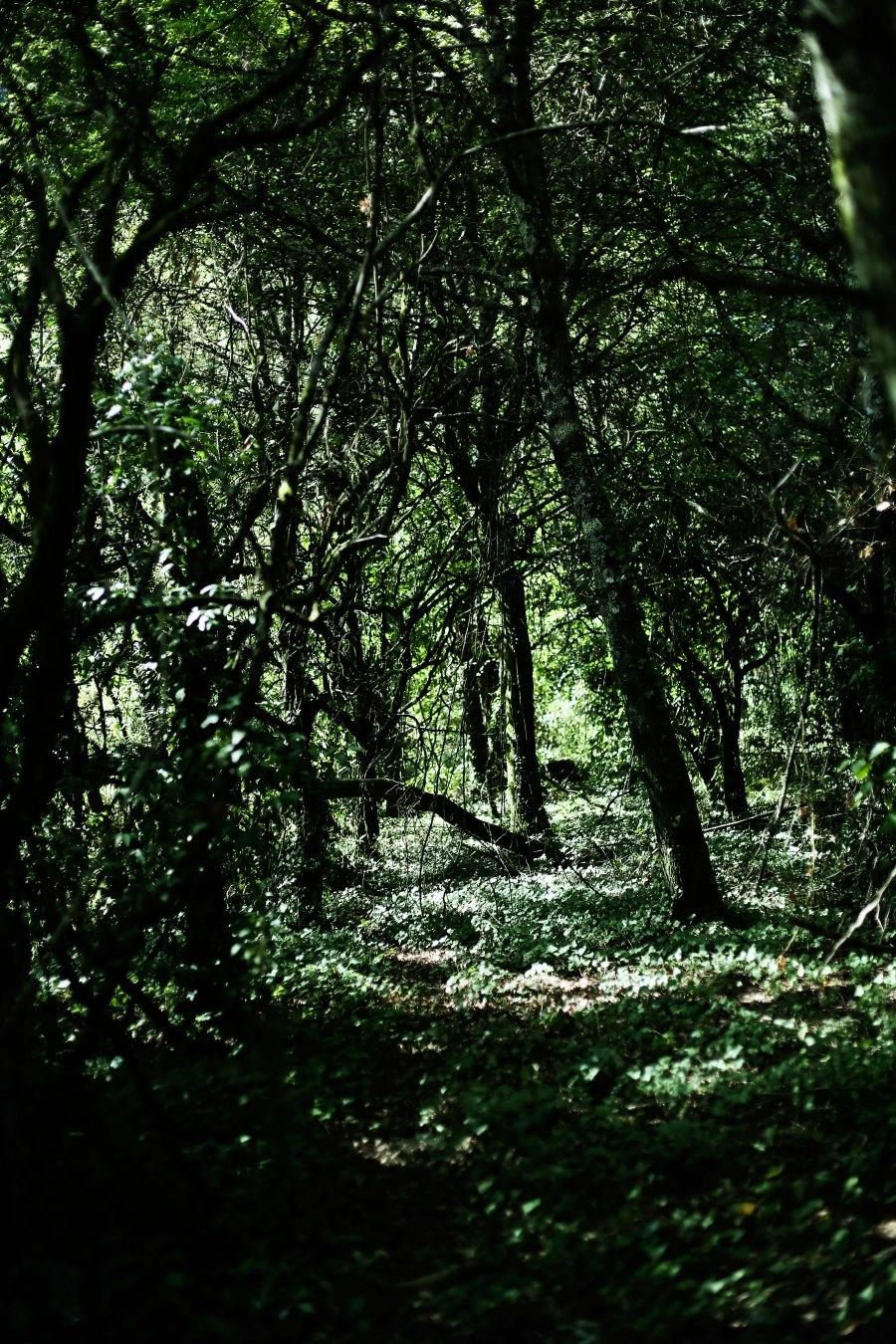 floresta0