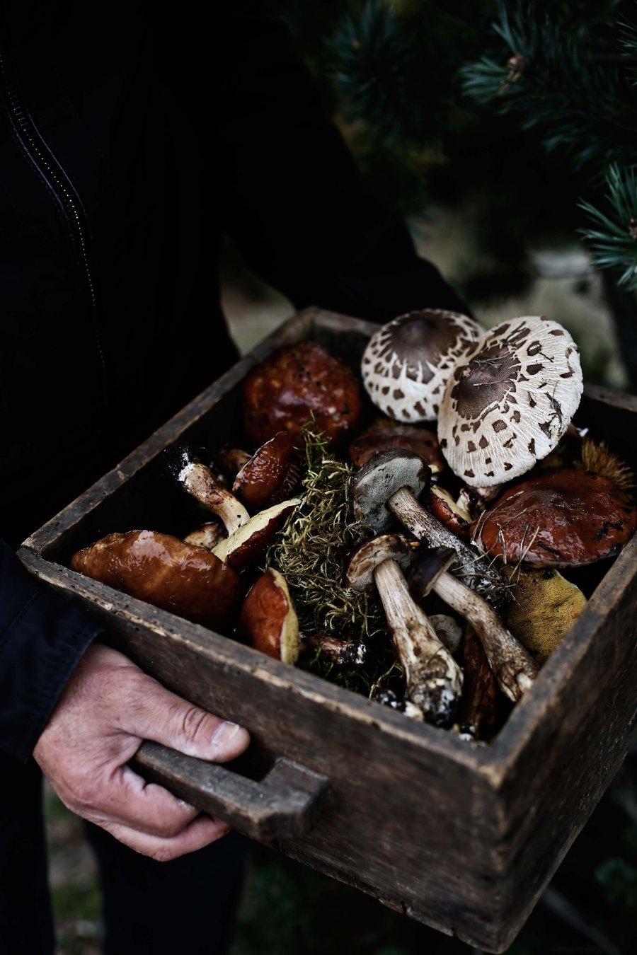 caixa-cogumelos0